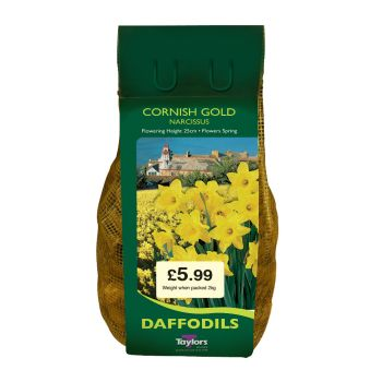 Taylors Bulbs DC77 Cornish Gold Daffodils available from Strawberry Garden Centre, Uttoxeter
