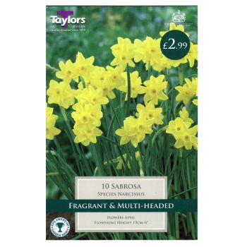 Taylors Bulbs TP249 Narcissus Sabrosa available from Strawberry Garden Centre, Uttoxeter