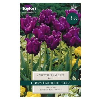 Taylors Bulbs TP473 Tulip Victorias Secret available from Strawberry Garden Centre, Uttoxeter