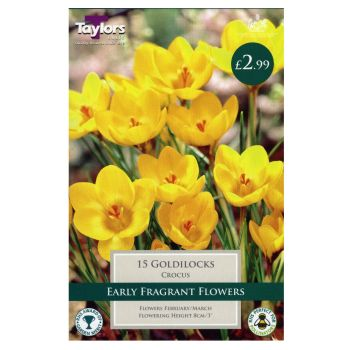 Taylors Bulbs TP666 Crocus Goldilocks available from Strawberry Garden Centre, Uttoxeter