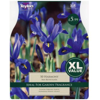 Taylors Bulbs XL789 Iris Dwarf Harmony available from Strawberry Garden Centre, Uttoxeter