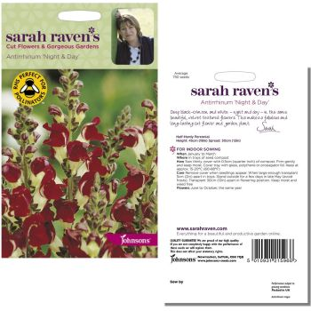 sarah-raven-antirrhinum-night-day-seeds-available-from-strawberry-garden-centre-uttoxeter