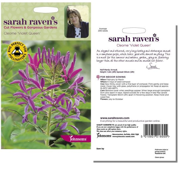 sarah-raven-cleome-violet-queen-seeds-available-from-strawberry-garden-centre-uttoxeter