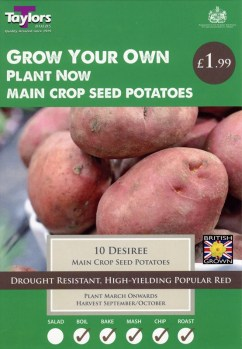 taylors-desiree-seed-potatoes-available-from-strawberry-garden-centre-uttoxeter