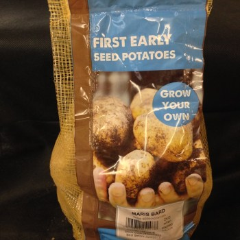 taylors-maris-bard-first-early-seed-potatoes-available-from-strawberry-garden-centre-uttoxeter