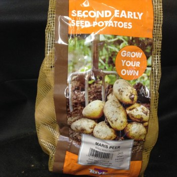 taylors-maris-peer-second-early-seed-potatoes-available-from-strawberry-garden-centre-uttoxeter