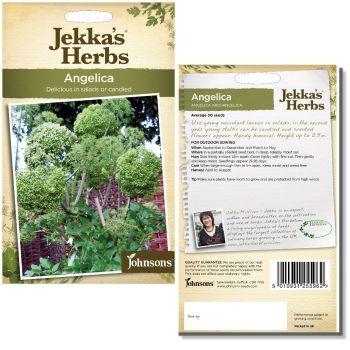 jekkas-herbs-angelica-seeds-available-from-strawberry-garden-centre-uttoxeter