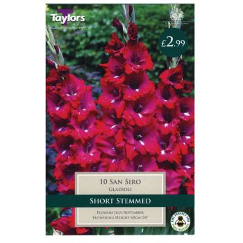 Taylors Bulbs TS139 Gladioli San Siro available from Strawberry Garden Centre, Uttoxeter