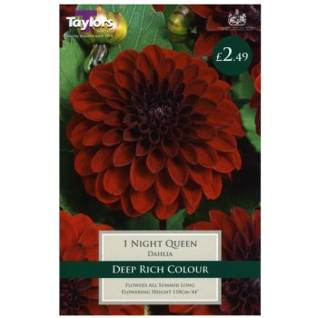 Taylors Bulbs TS382 dahlia night queen bulbs available from Strawberry Garden Centre, Uttoxeter