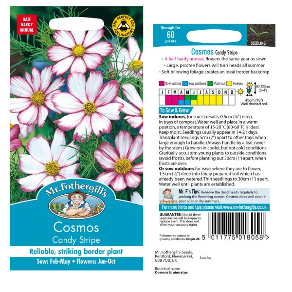Mr. Fothergill Cosmos Candy STripe Seeds available from Strawberry Garden Centre, Uttoxeter