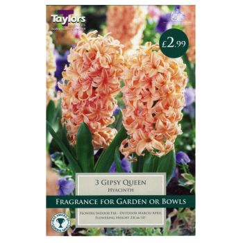 Taylors Bulbs TP634 Hyacinth Gypsy Queen available from Strawberry Garden Centre, Uttoxeter