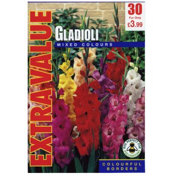Taylors Bulbs ESV503 mixed colour gladioli available from Strawberry Garden Centre, Uttoxeter
