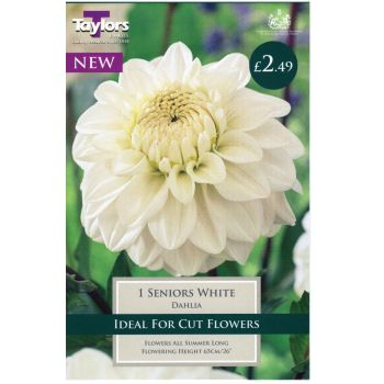 Taylors Bulbs TS484 dahlia seniors white available from Strawberry Garden Centre, Uttoxeter