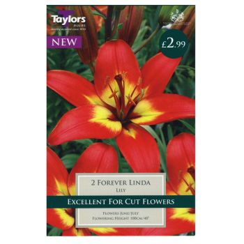 Taylors Bulbs TS519 lily forever linda bulbs available from Strawberry Garden Centre, Uttoxeter