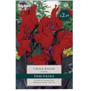 Taylors Bulbs TS605 Canna Black Knight available from Strawberry Garden Centre, Uttoxeter