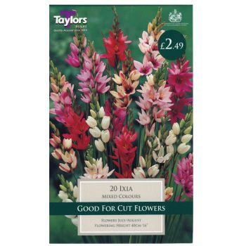 Taylors Bulbs TS753 ixia mixed available from Strawberry Garden Centre, Uttoxeter