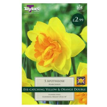 Taylors Bulbs TP139 Daffodil Apotheose available from Strawberry Garden Centre, Uttoxeter