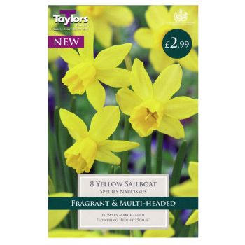 Taylors Bulbs TP234 Narcissi Yellow Sailboat available from Strawberry Garden Centre, Uttoxeter