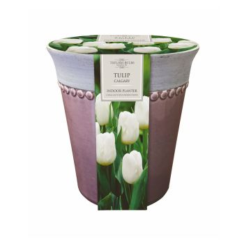 Taylors Bulbs AP53 Indoor Ceramic Tulip Planter available from Strawberry Garden Centre, Uttoxeter