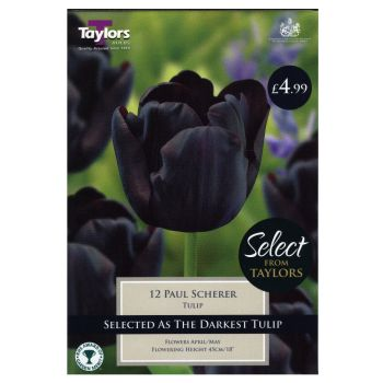 Taylors Bulbs SE2012 Tulip Paul Scherer available from Strawberry Garden Centre, Uttoxeter
