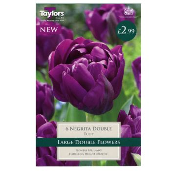 Taylors Bulbs TP439 Tulip Negrita Double available from Strawberry Garden Centre, Uttoxeter