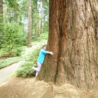 Confessions of a Tree Hugger