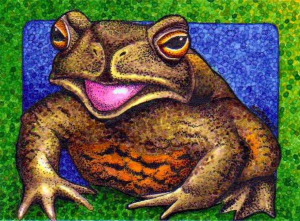The Wild Toads of Borneo