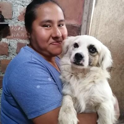 Volunteer holding a dog