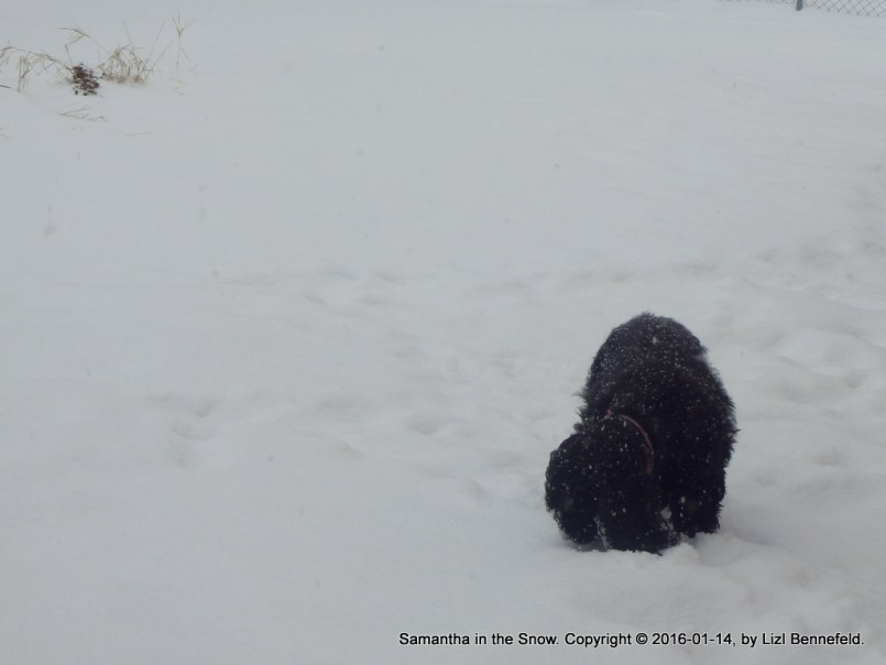 my dog, searching for the rabbit
