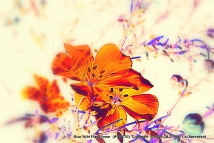 Blue Wild Flax Flowers - Art
