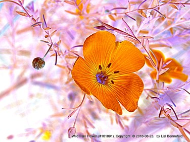 blue wild flax flower, colors inverted