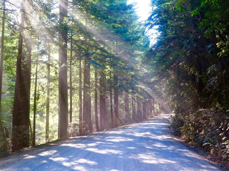 The way sun shines through the Redwoods and dust kicked up by the 10 mile dirt road to the canyon, is magical.