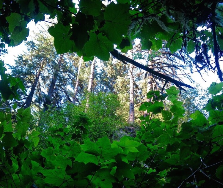 Breaks in the canopy reveal glimpses of distant trees towering toward the sky.
