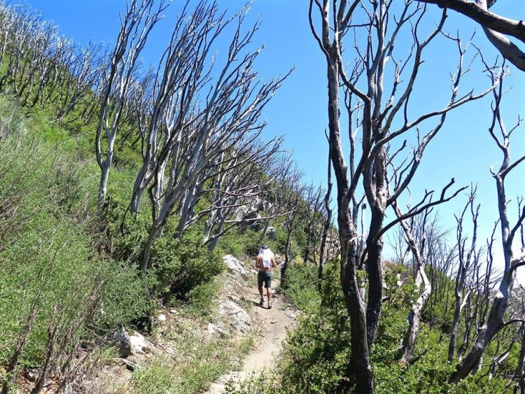 A steep climb, through some terrain scorched by the Station Fire of 2009, brings you to the San Gabriel summit.