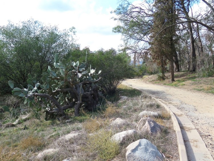 The Marx Brothers bought the 107-acre tract in 1960 and planned to sell it for use as a cemetery. However local ecologists stepped in, purchased it and turned it over to the Forest Service in 197l as a nature preserve.