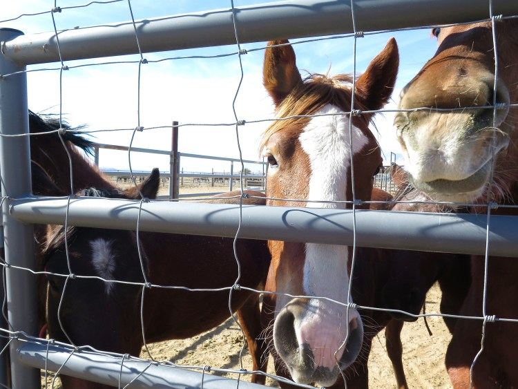 These 'wild' horses weren't timid or shy and sure seemed to enjoy the attention.
