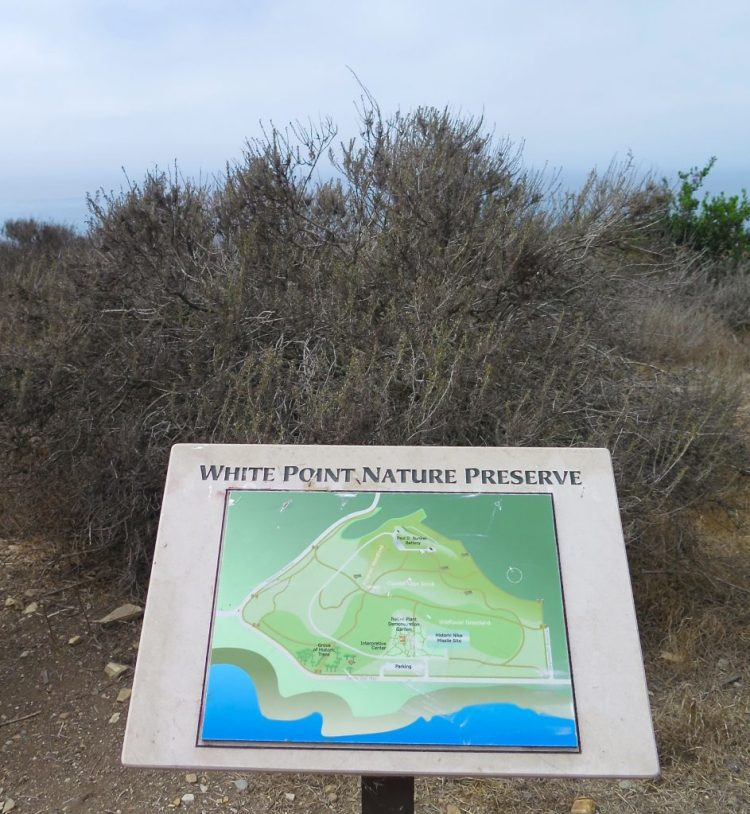 """This area of land, which juts out into the sea to form a point more than 100 feet above sea level, has been called both """"White Point"""" and """"White's Point"""". The origin of the name is disputed. One version is that it was named for a sailor named White, who jumped ship and swam to shore at this spot, thus """"White's Point""""."""