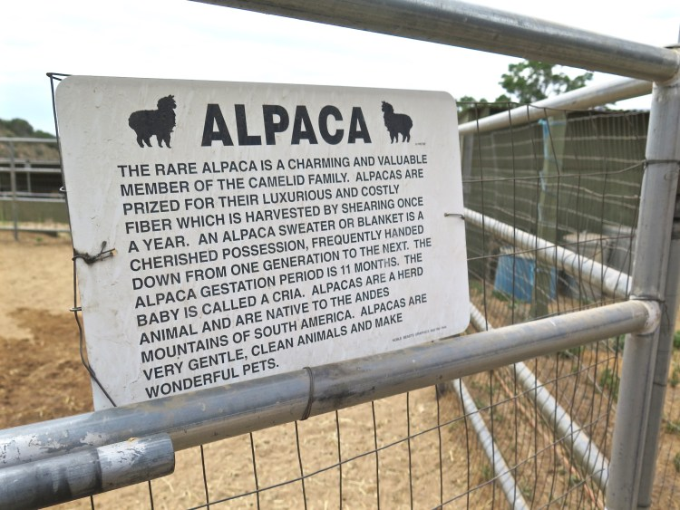 ...she bought an alpaca farm.