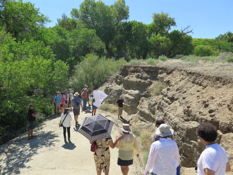 At Pallett Creek, there are sag pond deposits that have covered the San Andreas fault for over 2000 years, now uplifted into a terrace as the creek cuts down.