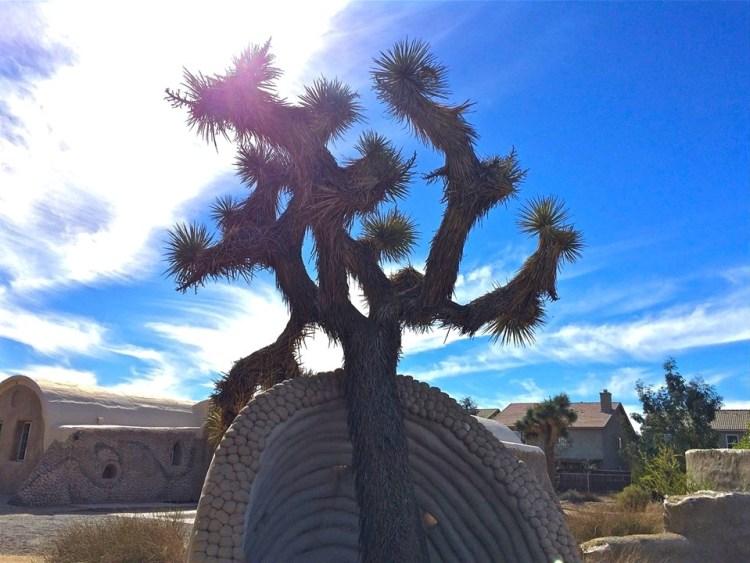 This Joshua Tree needed a little Superadobe help.
