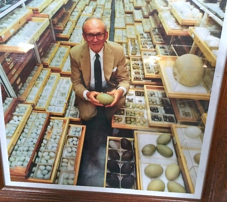 Ed N. Harrison was a passionate natural historian. He was an active wildlife photographer, and an avid collector of bird skins, eggs, nests, and natural history books. In 1956, Ed established the Western Foundation of Vertebrate Zoology (WFVZ).