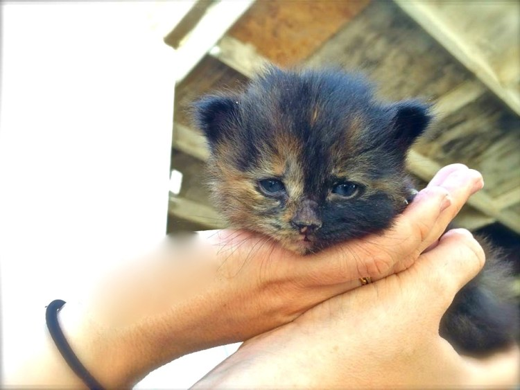 A fresh batch of kittens were also on display...this was the cutest of the bunch.