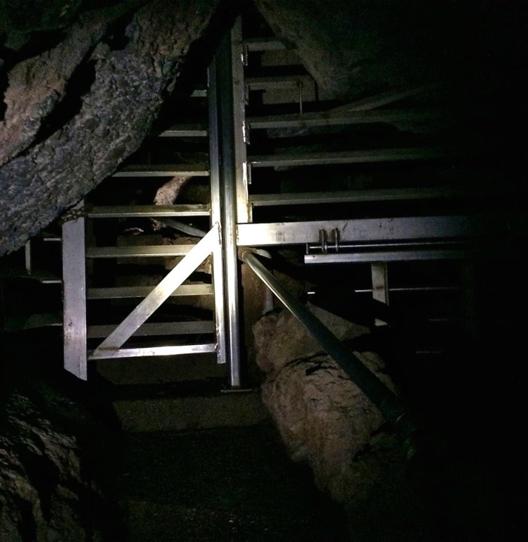 Thirteen species of bats have been documented at Pinnacles, with a further three species considered likely. The park's talus caves provide roosting and breeding habitat for the bats and are occasionally closed off to protect them.