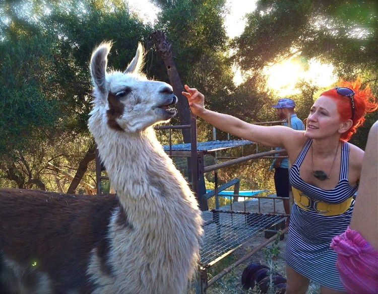 "If I ever get a free range llama I shall name it, ""The Dolly Llama""."
