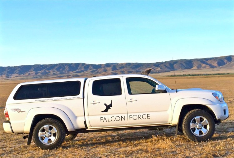 Meet Falcon Force, a team of raptors lead by Vahe' Alaverdian who provide traditional falconry methods to control nuisance birds at vineyards, crop fields, airports, and landfills. Vahe' is a Master falconer with 30 years of experience handling and training birds of prey.