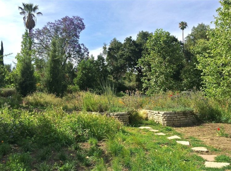 The Seasonal Wash carries water down the slope of the Garden to the vernal pool. A thick canopy of California sycamores lies overhead as the visitor explores the boulder rich pathways within this zone and imagines walking along a natural arroyo.