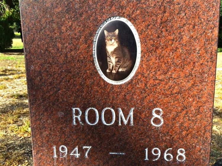 Room 8 was the unofficial mascot of Elysian Heights Elemetary School. He came on the scene entering room no. 8 in 1952 through an open window and became a fixture over the next sixteen years.
