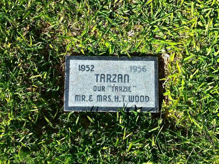 Oh look, it's Tarzan...