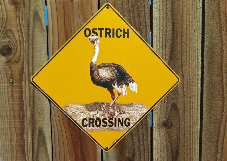 First up, the ostriches of course.