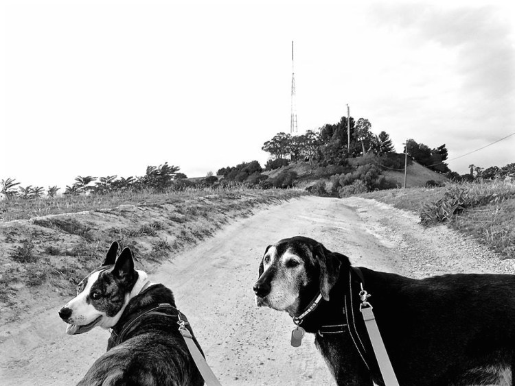 It's a place to walk the dogs...